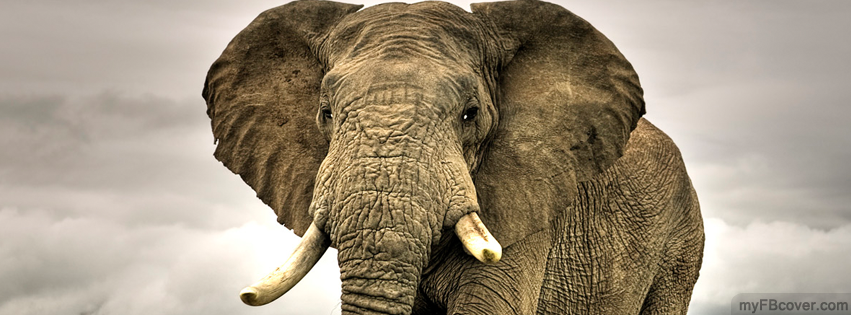 african elephant facebook cover