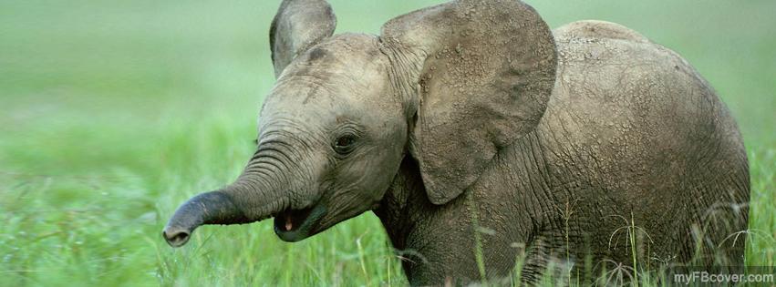 Baby elephant cover photos — img 2