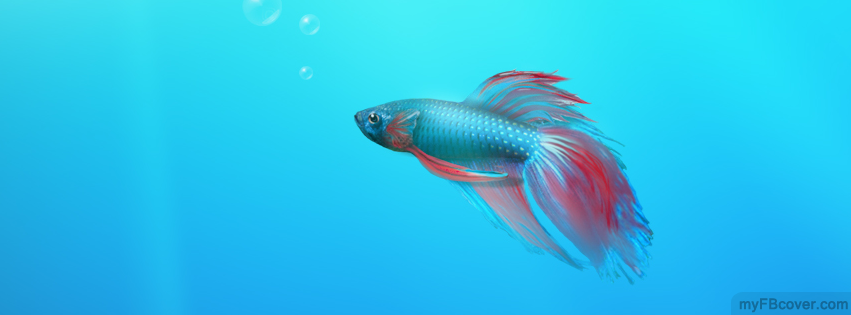 Cute Fish Facebook Cover Timeline Cover Fb Cover