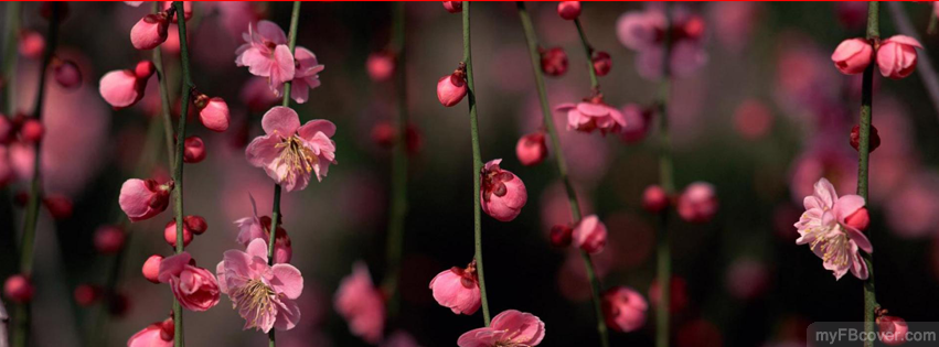 Spring flowers facebook cover timeline cover fb cover mightylinksfo