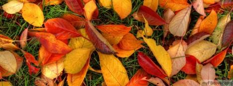 Autumn Fall Facebook Cover