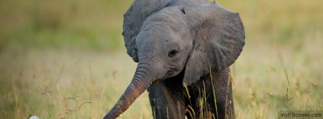 Baby Elephant Facebook Cover