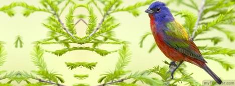 Bird Facebook Cover