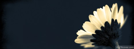 Black Flower Facebook Cover