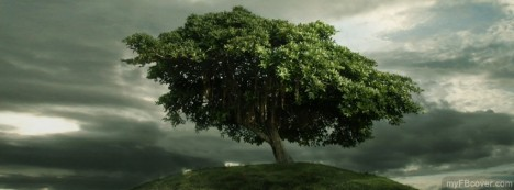 Cool Tree Facebook Cover