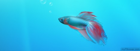 Cute Fish Facebook Cover