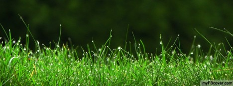 Dew On Grass Facebook Cover