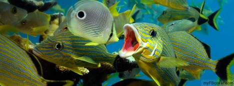 Fish Cleaning Facebook Cover