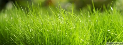 Green Grass Facebook Cover