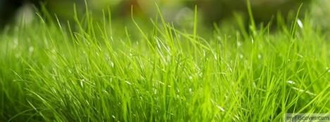 Green Grass Facebook Cover