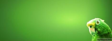 Green Parrot Facebook Cover
