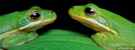 Green Tree Frogs Facebook Cover