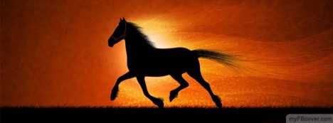 Horse Facebook Cover
