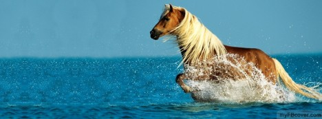 Horse Running at Sea Shore Facebook Cover