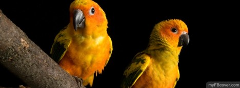 Love Birds Facebook Cover