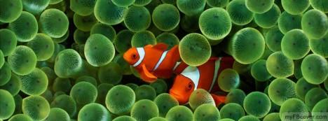 Nemo Facebook Cover