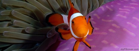 Nemo Fish Facebook Cover