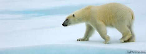Polar Bear Facebook Cover