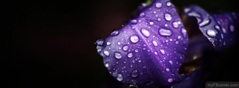 Purple Leaf Facebook Cover