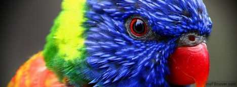 Rainbow Lorikeet Facebook Cover