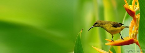 Small Bird On The Ruff Facebook Cover