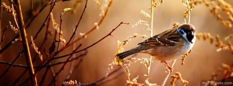 Sparrow Facebook Cover