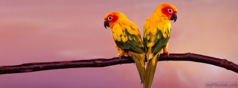 Sun Conure Facebook Cover
