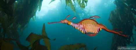 Weedy Sea Dragon Facebook Cover