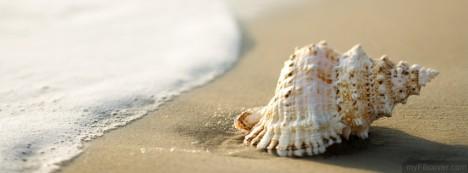 Whelk Shell Facebook Cover