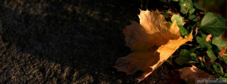 Yellow Leaf Facebook Cover
