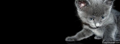 Black Kitten Facebook Cover