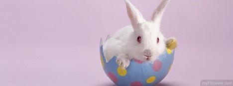 Bunny Facebook Cover