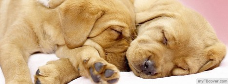 Cuddling Puppies Facebook Cover