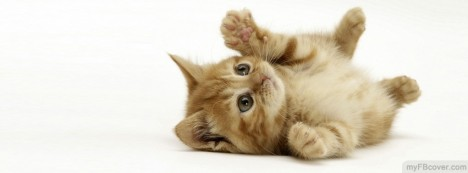 Cute Brown Kitten Facebook Cover