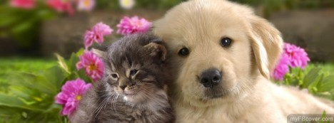 Cute Puppy and Kitten Facebook Cover