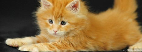 Kitten Facebook Cover