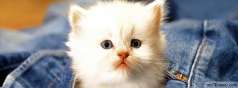 Kitten Facebook Cover