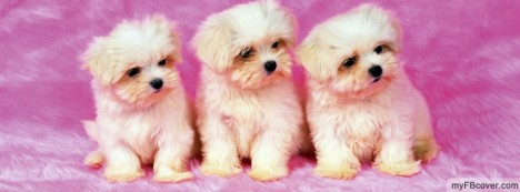 Puppies Facebook Cover
