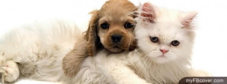 Puppy and Kitten Facebook Cover