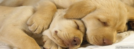 Sleeping Puppies Facebook Cover