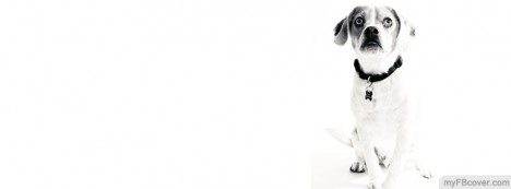 White Dog Facebook Cover