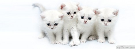 White Kittens Facebook Cover
