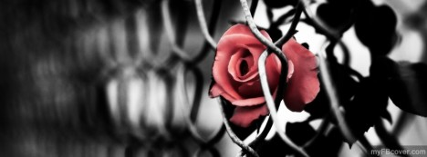 Fenced Rose Facebook Cover